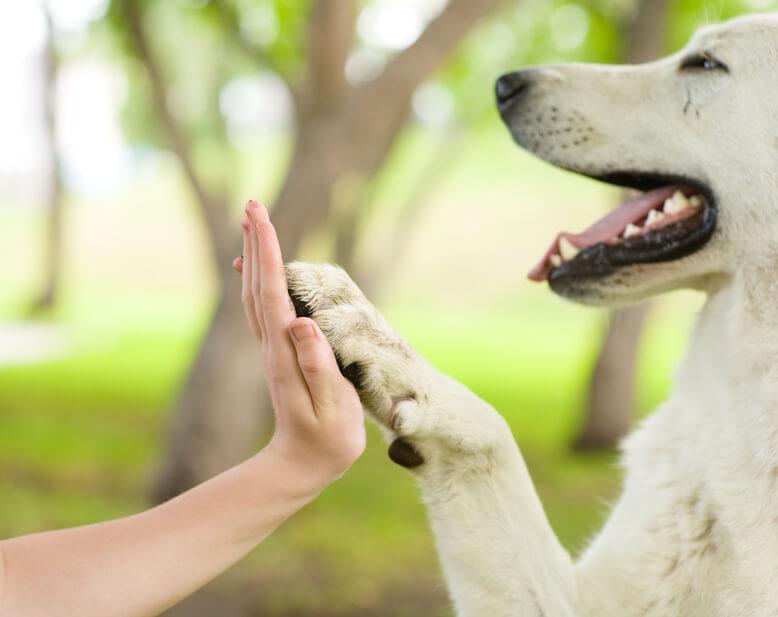 Perro feliz dando la pata