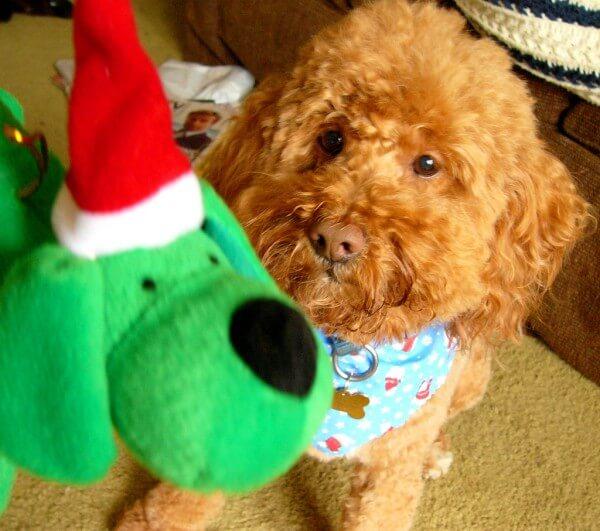Perro disfrazado con perro de peluche