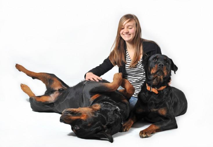 rottweilers y la familia