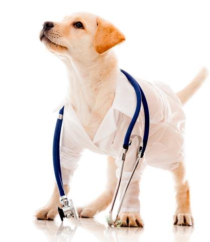perro vestido de veterinario