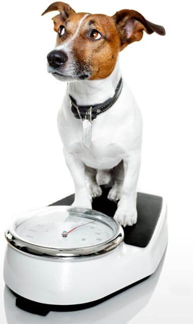 imagen de perro en una báscula
