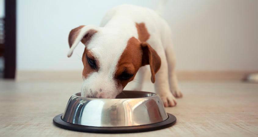 perro puppy comiendo