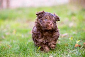 Perro de raza pequeña y jardín