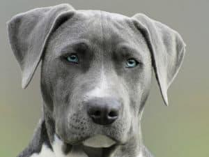 Cuidados para la salud de un perro senior