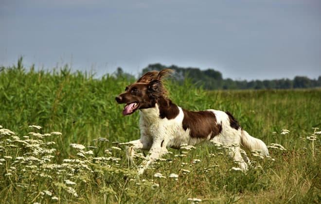 Perro y campo