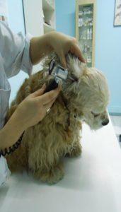 Perro y veterinario