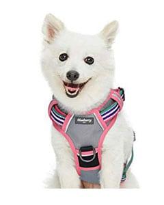 Perro pequeño con arnés
