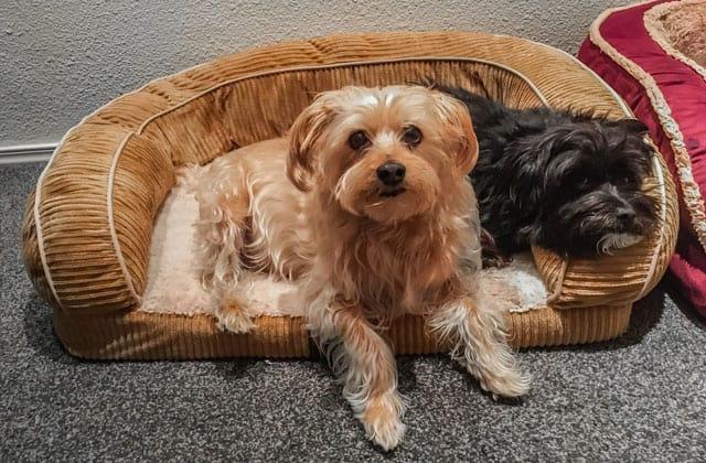 Dos perros tumbados sobre una cama para perros