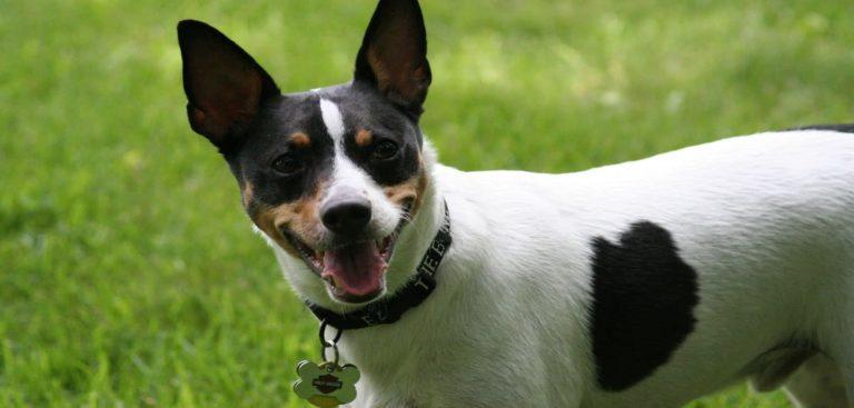 Perro en un jardín con collar