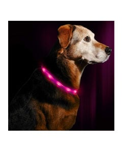 Perro y collar con luces