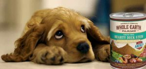 Mejores alimentos húmedos para perros