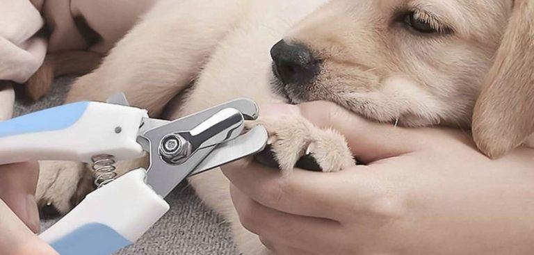 Mejores corta uñas para perros
