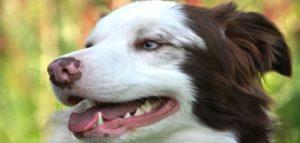 Perro con la boca abierta mostrando sus dientes