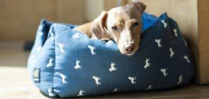 Perro tumbado sobre su cama