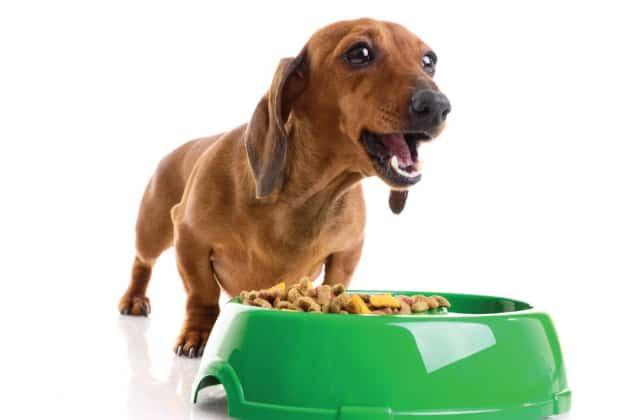 Perro pequeño y tazón lleno de pienso