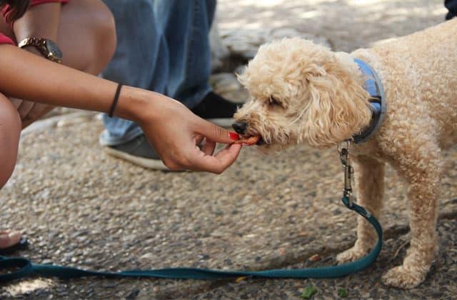Amo dando de comer a su perro en la boca