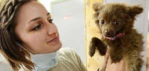 Pruebas de ADN para perros