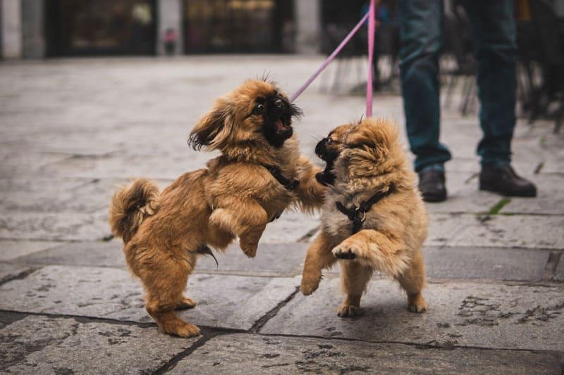 hombre y dos perros