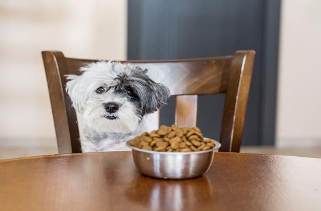 Perro pequeño frente a una meza con un tazón de pienso