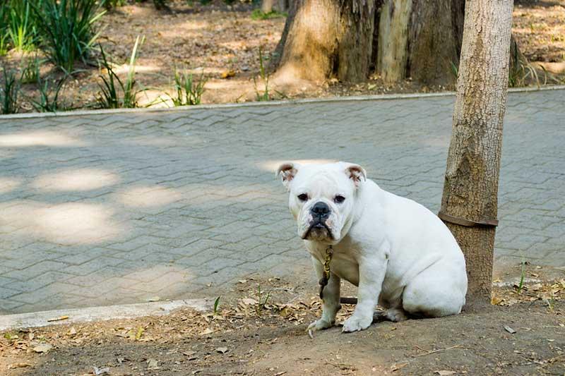 Perro atado a un árbol
