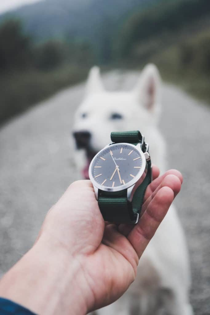 Reloj de agujas y perro