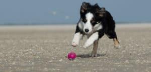 Perro corriendo y pelota