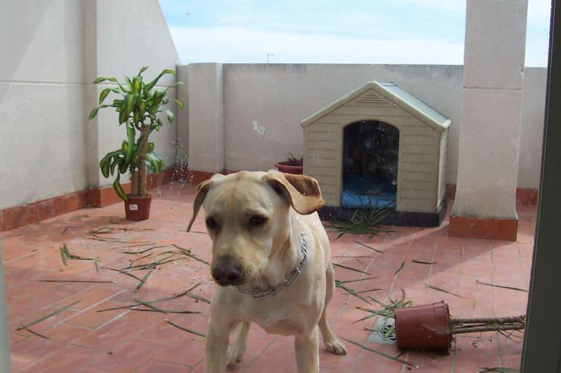 Terraza, perro y planta destrozada